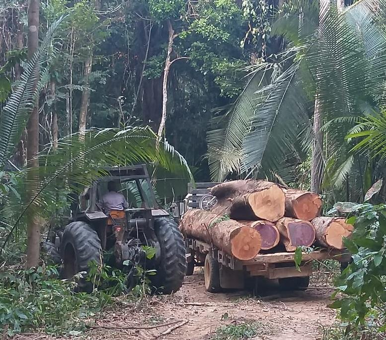 Two arrested for illegal logging near Conselvan